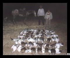 -АРГЕНТИНА - Охота на гуся